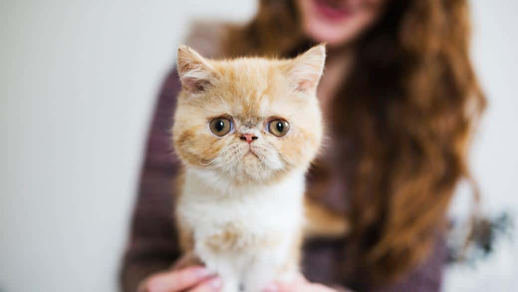 Cats With Down Syndrome \u2014 How to Take Care of Them