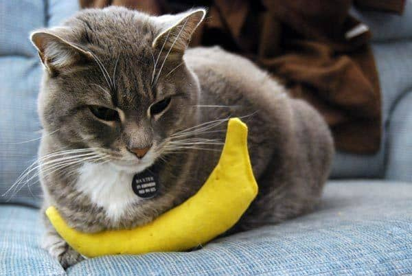 are bananas bad for cats