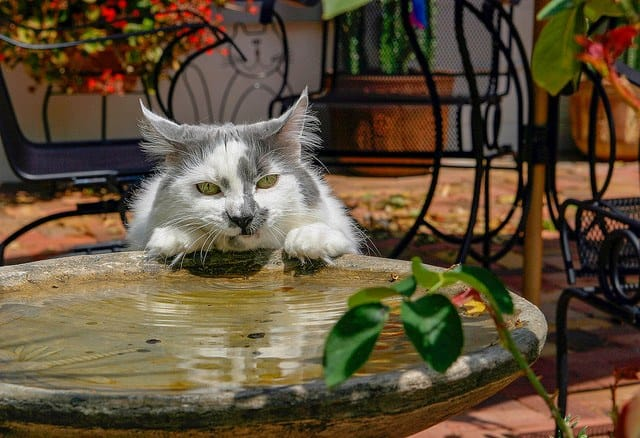 how long can cats go without water