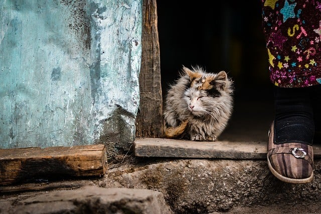 Dangers of cat urine,health effects of breathing the odor