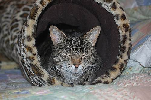 cat tunnel for your kitty