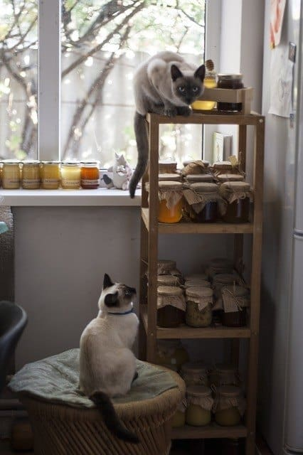 Cats climbing around a honey stand