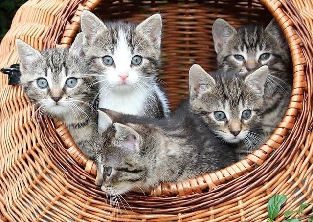 Homemade Kitten Formula: The Best Methods and Guide!