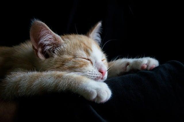 Cat sleeping on my arm