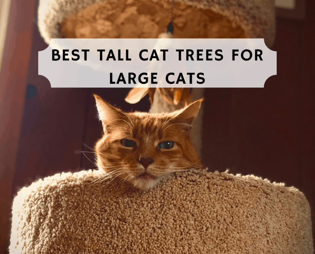 Best Tall Cat Trees for Large Cats