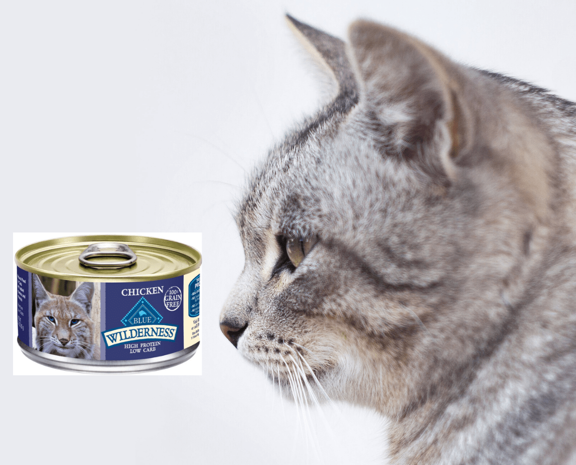 Blue Buffalo Wet Cat Food with cat