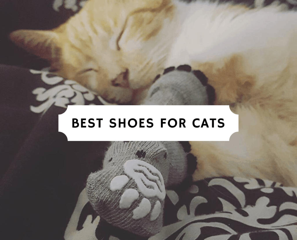 Best Shoes for Cats