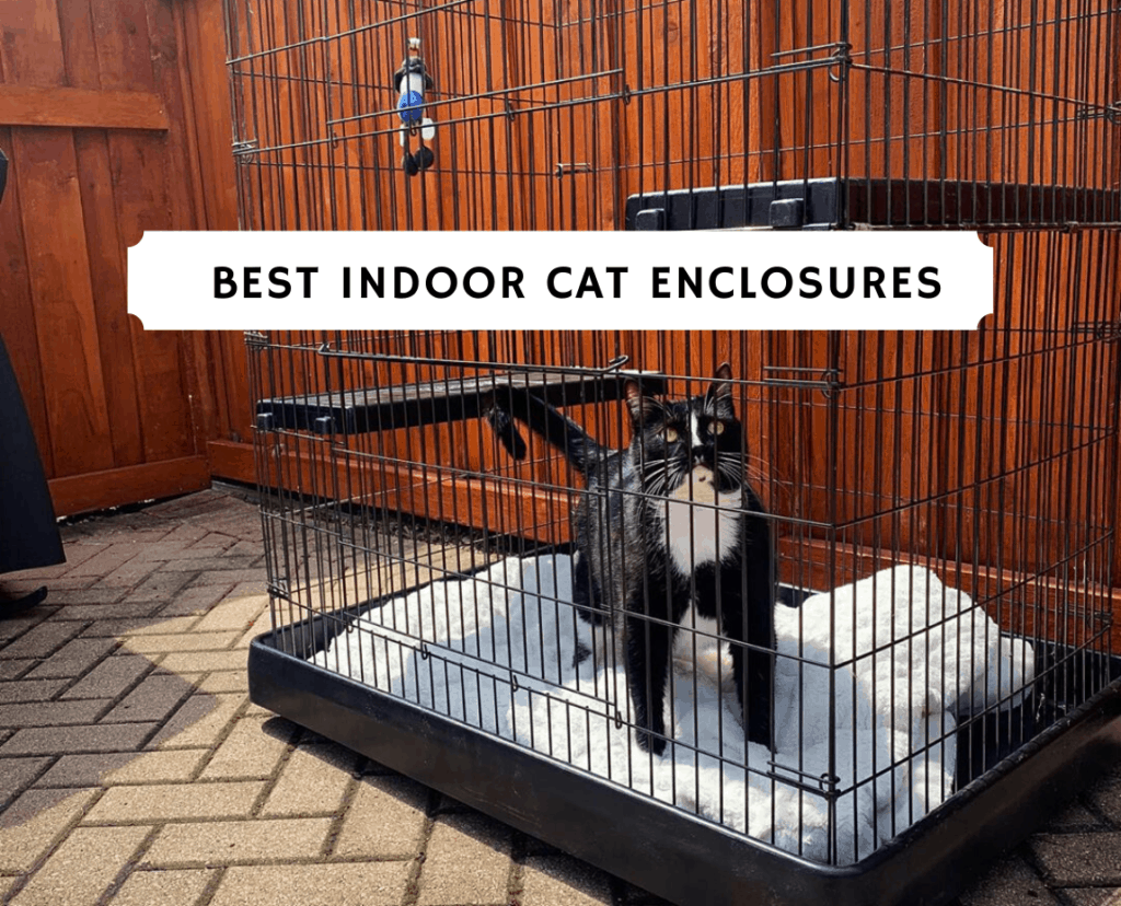 Best Indoor Cat Enclosures
