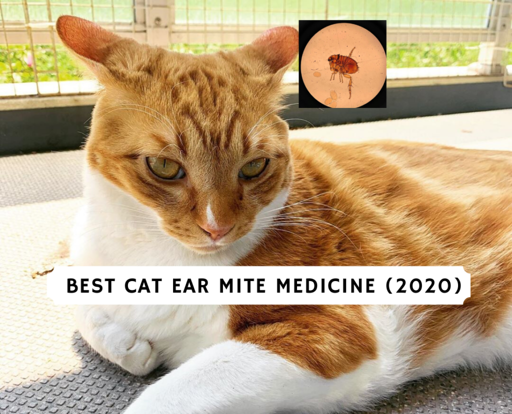 Best cat ear mite medicine (2020)