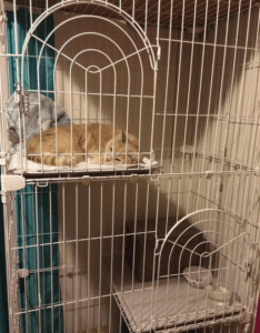 indoor cat enclosure